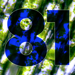 #81 – Billy No Mates